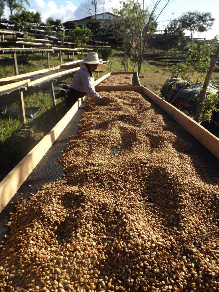 Coffee Processing Explained Part III – The Honey Process (aka semi-washed/pulped natural)