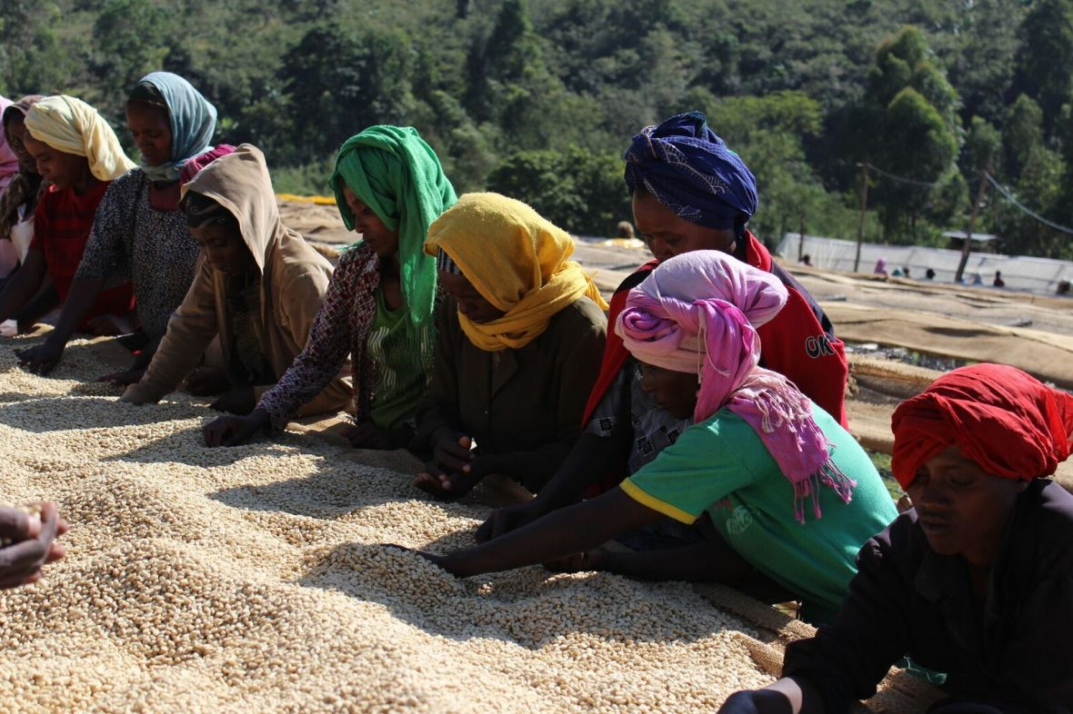 Ethiopia Geta Bore Coffee: A Story of Collaboration, Sustainability and Empowerment